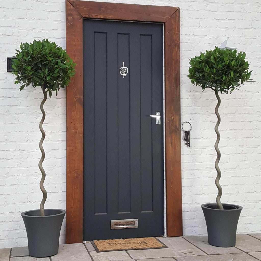 TWO Large Bay Tree Spiral Corkscrews (Inc Choice of Luxury Planters)