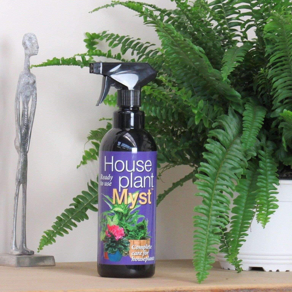 House Plant Feed - Treat Your Plant