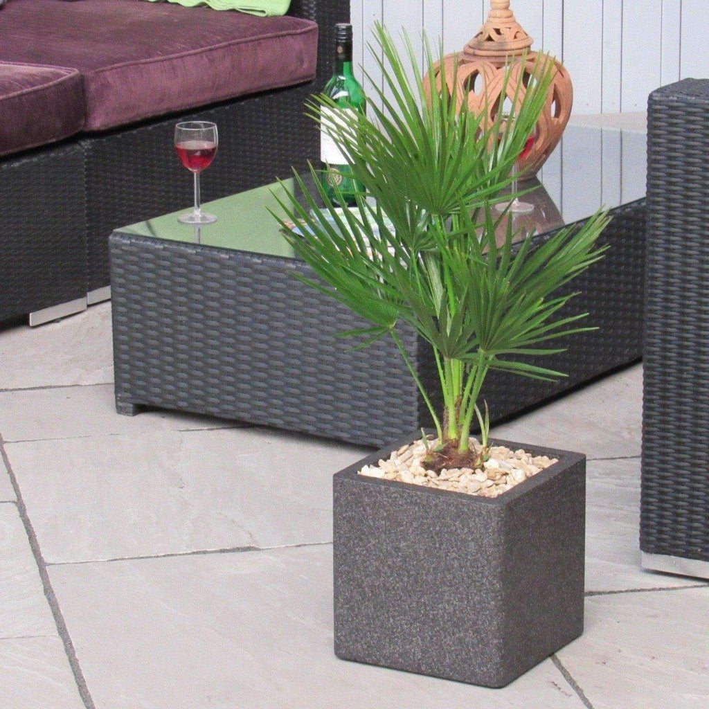 Palm Tree Chamaerops Humilis Planter Indoor or Outdoor (Complete As Shown)
