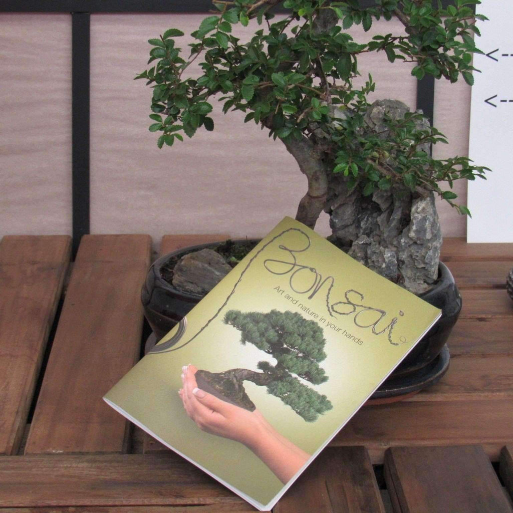 Beginners Guide To Bonsai Trees