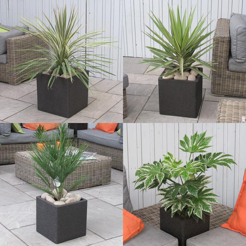 Tropical Palm Tree Instant Garden Set Complete As Shown Delivered To Your Door - Tropicana 2 Set