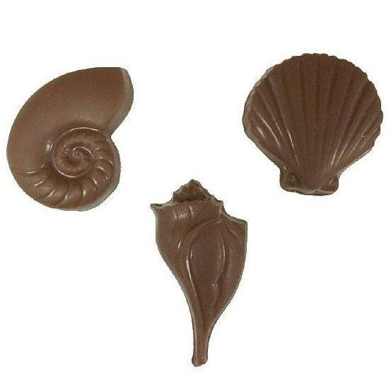 Seashell- Medium Flat Assorted
