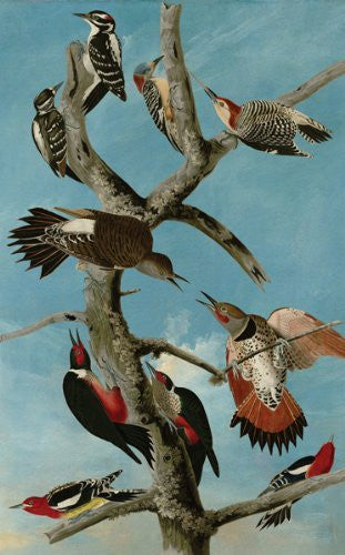 Artifact Puzzles - Audubon Woodpeckers Wooden Jigsaw Puzzle