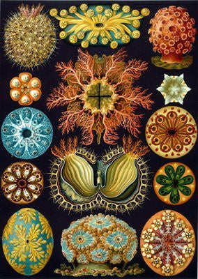Artifact Puzzles - Haeckel Sea Squirts Wooden Jigsaw Puzzle