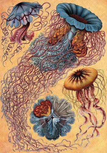 Artifact Puzzles - Haeckel Jellyfish