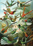 Artifact Puzzles - Haeckel Hummingbirds Wooden Jigsaw Puzzle