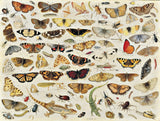 Artifact Puzzles - Jan van Kessel Butterflies Wooden Jigsaw Puzzle