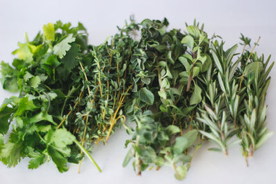 Our Favorite Herbs and How to Care for Them.