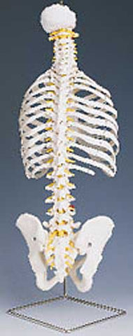 Classic Flexible Spine with Ribs - Lawyers & Judges Publishing Company, Inc.