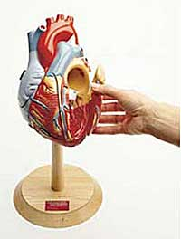 Giant Heart of America Model - Lawyers & Judges Publishing Company, Inc.