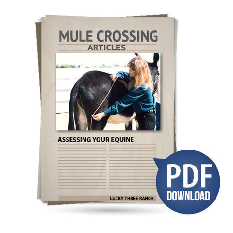 Assessing Your Equine
