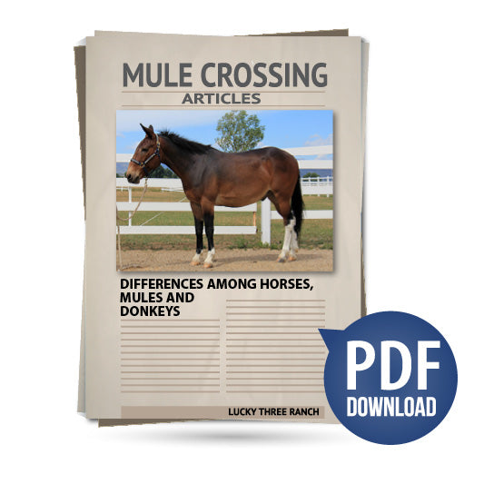 Differences Among Horses, Mules and Donkeys