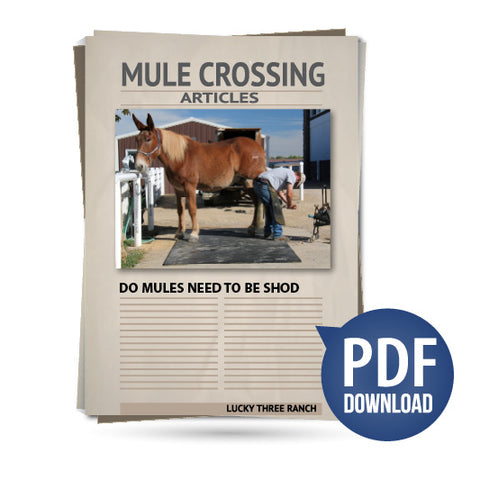 Do Mules Need to Be Shod?