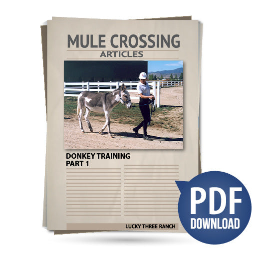 Donkey Training Part 01 - Leading