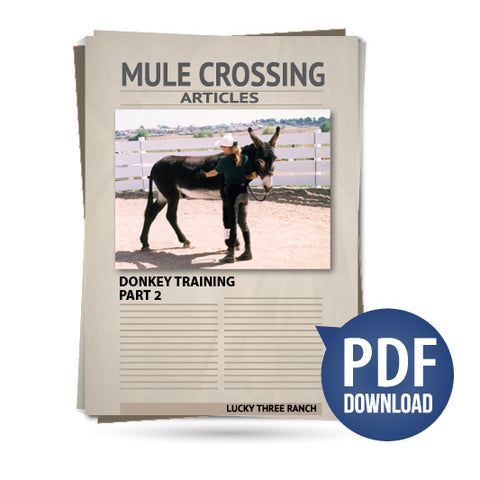 Donkey Training Part 02 - Round Pen