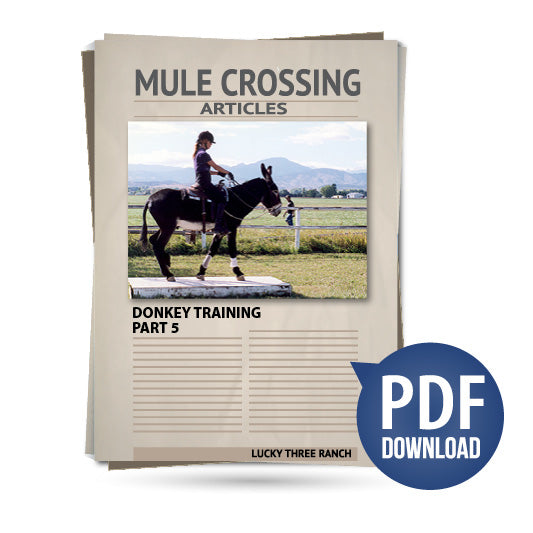 Donkey Training Part 05 - Saddle Obstacles