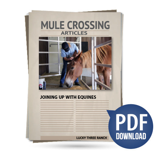 Joining Up With Equines