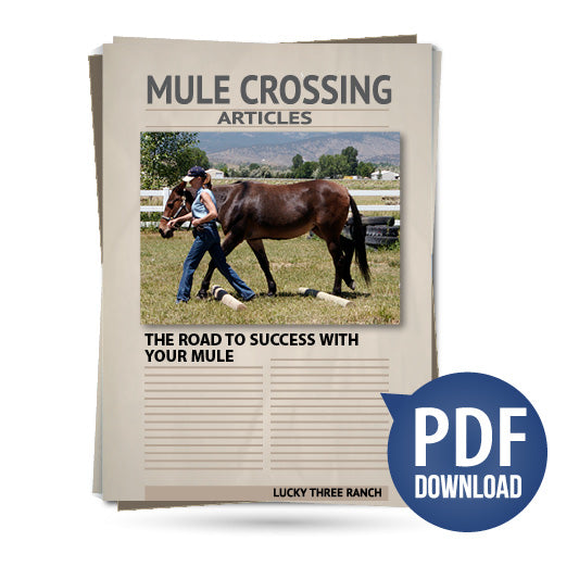 The Road to Success with Your Mule