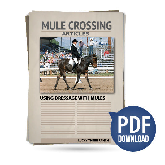 Using Dressage with Mules