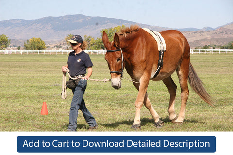 Training Tip - #004 Communication and Equines