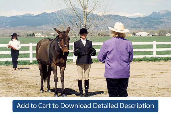 Training Tip - #039 Showmanship Patterns