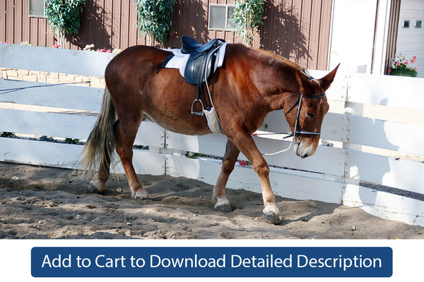 Training Tip - #054 Setting Up the Equine for Lunging