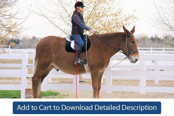 Training Tip - #083 Practice Exercises for Good Equitation