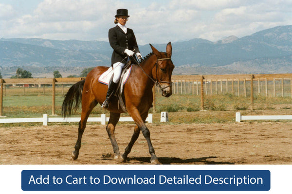 Training Tip - #090 Using Dressage as a Basis for Performance