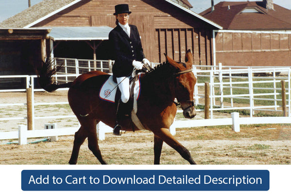 Training Tip - #093 The Counter Canter