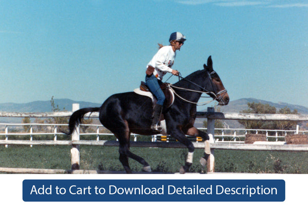 Training Tip - #099 The Canter Pole