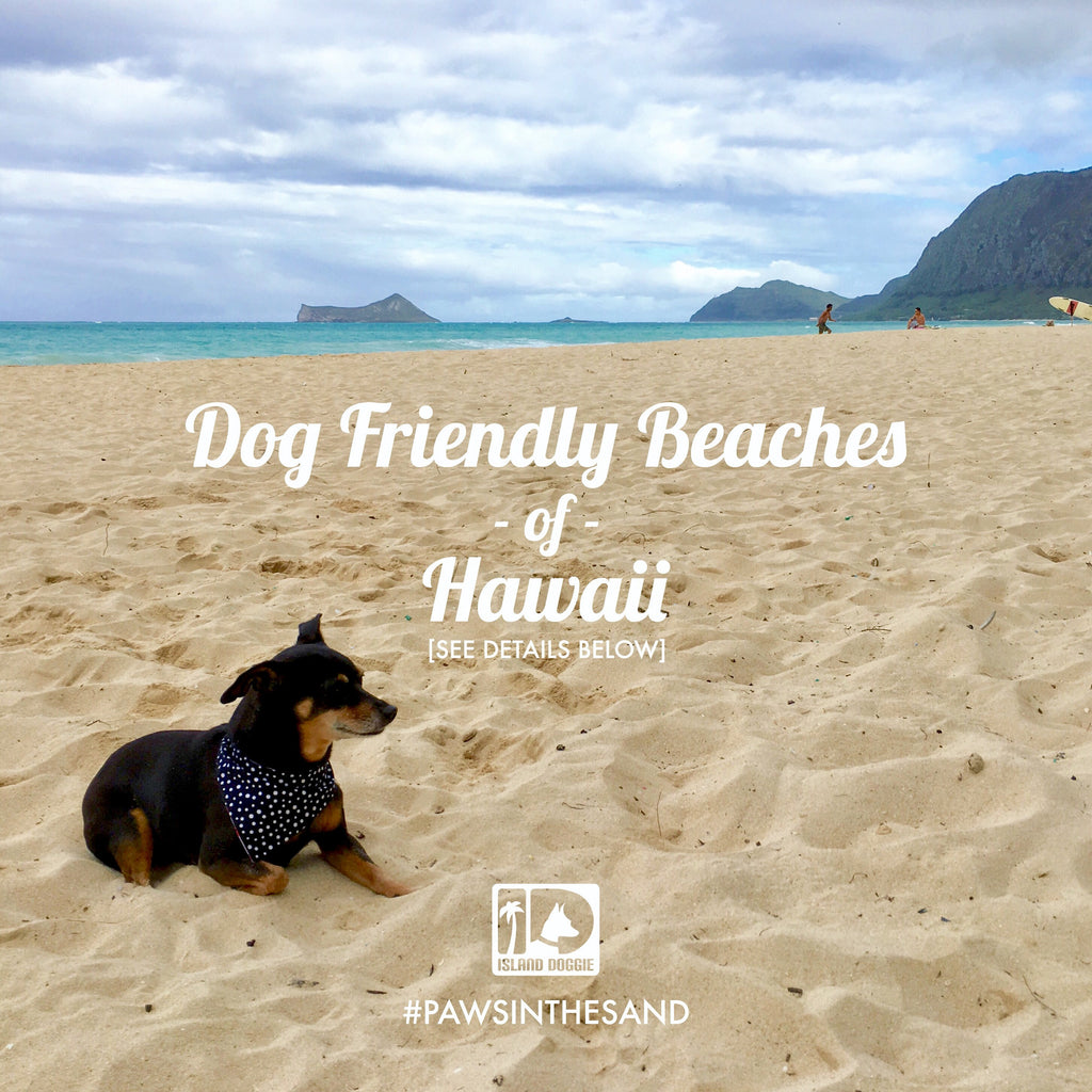 Dog Friendly Beaches of Hawaii
