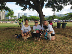 islanddoggie-friends-petwalk2015