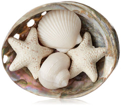 Gianna Rose Sea Shell Soaps