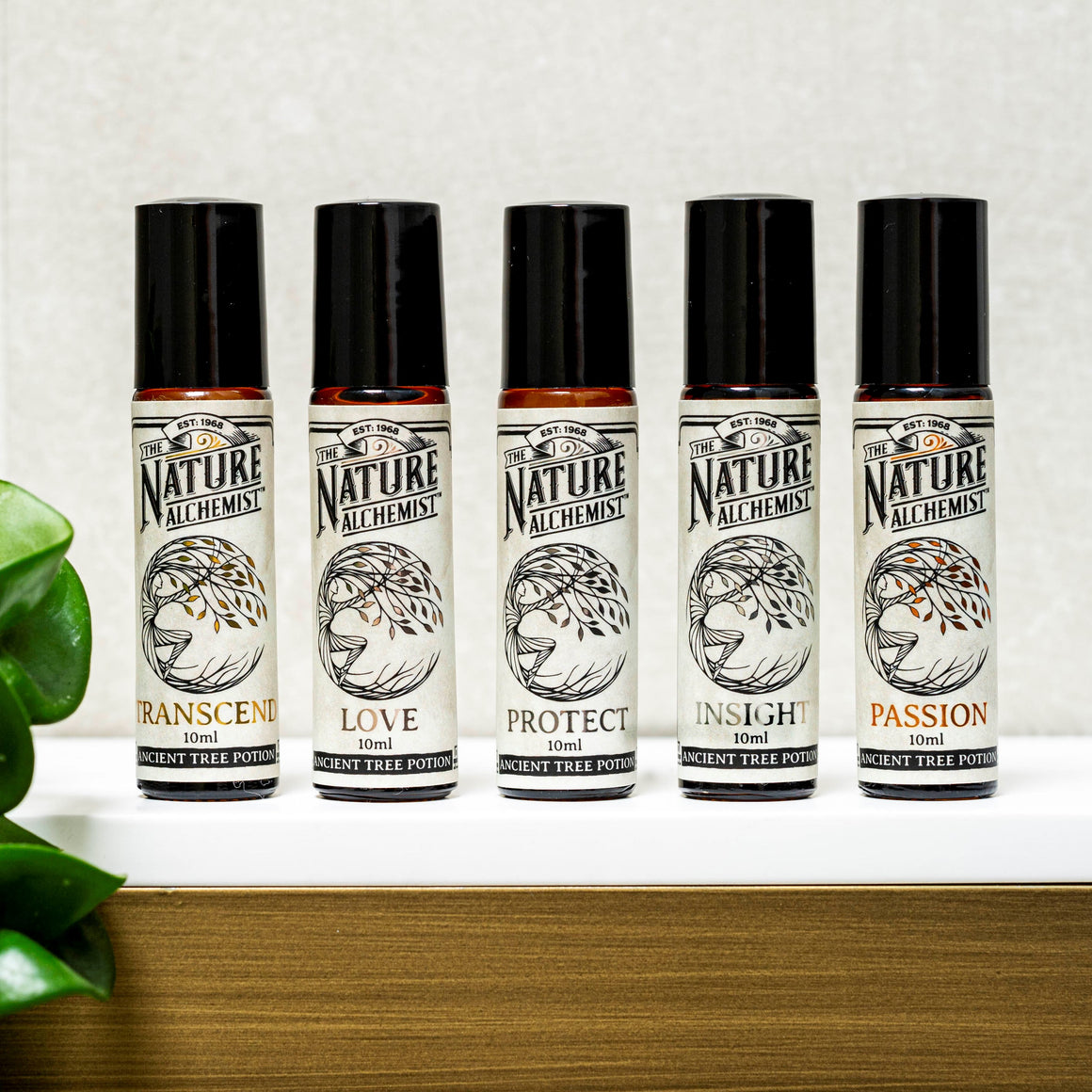 Starter Pack - Ancient Tree 10 ml Potions