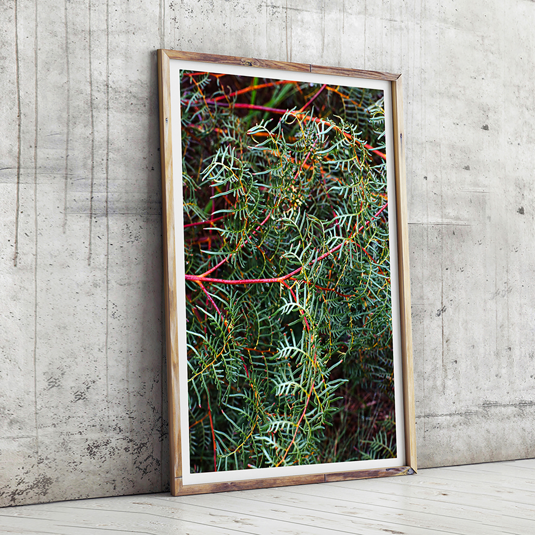 botanicals print / greenery print / new zealand print