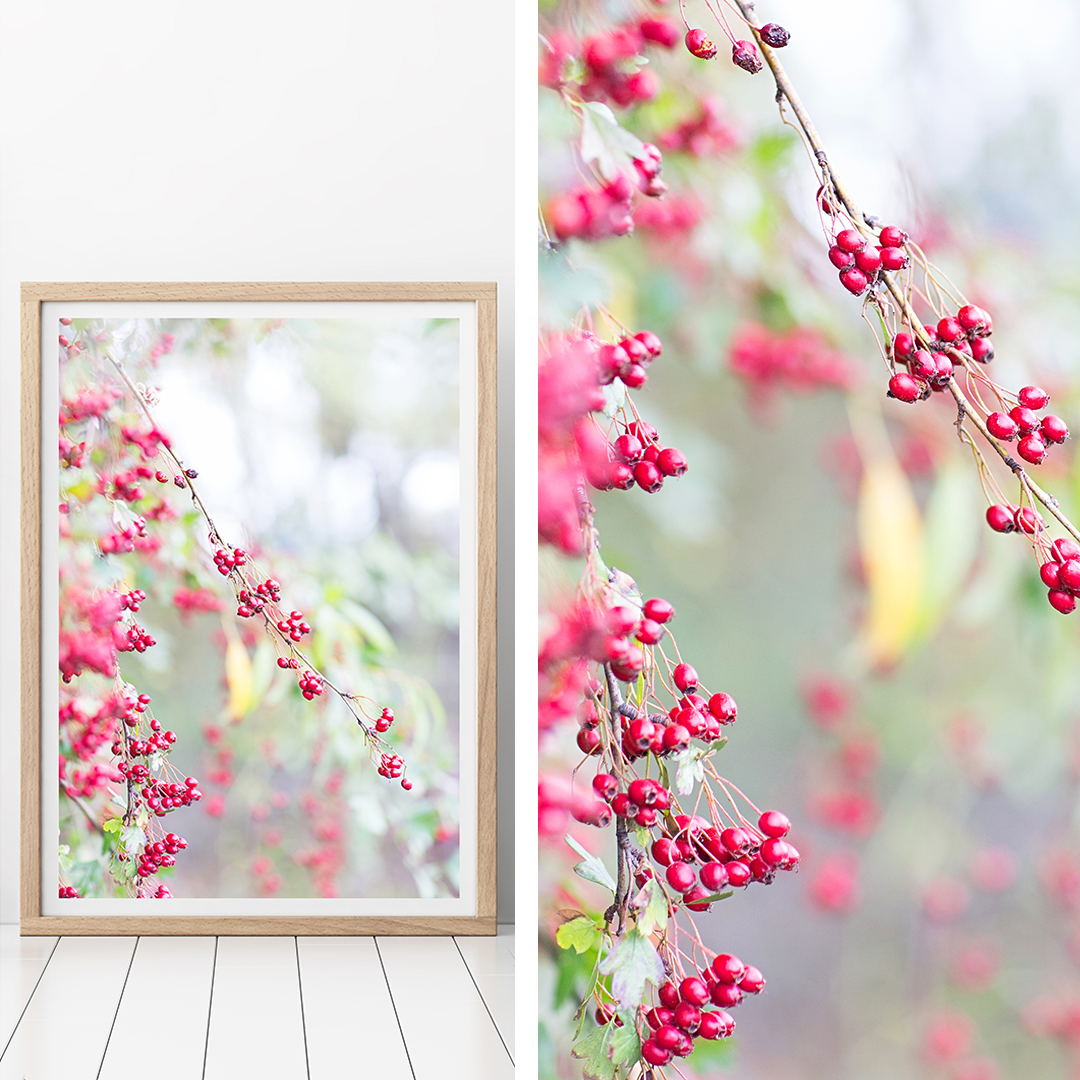 New Zealand Print / Botanicals Print / Nature Print