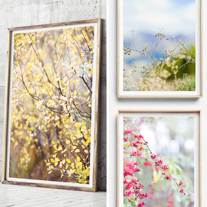Botanicals Print / New Zealand Print / New Zealand Photography