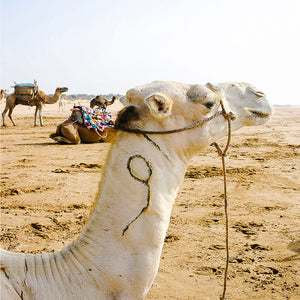 Travel Photography / Moroccan Artwork / Beach Print