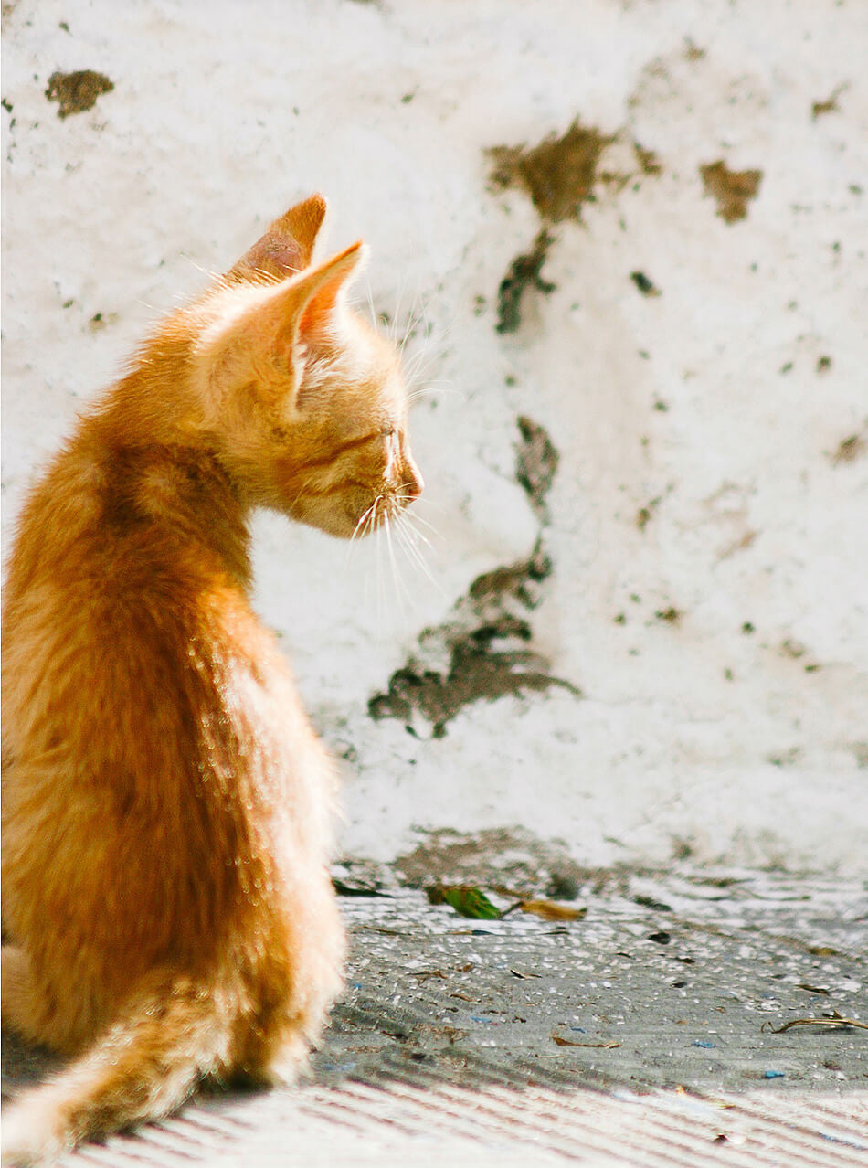 Moroccan Decor / Photo Print / Cat lovers