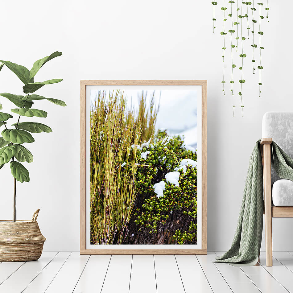 natural interior grass print coastal home photographic print new zealand photographic print of grass and nature for natural home interior