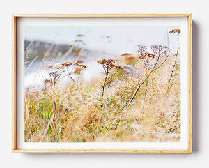natural interior grass print of natural home interior beige interior styling beach grass print new zealand rustic interior print scandi interior print