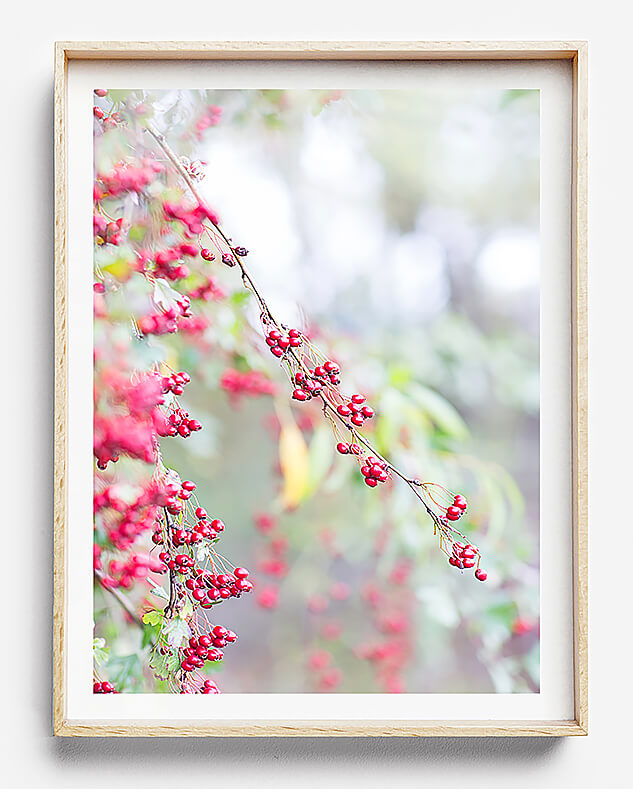 red interior wall art red photographic print natural interior new zealand plant natural interior art