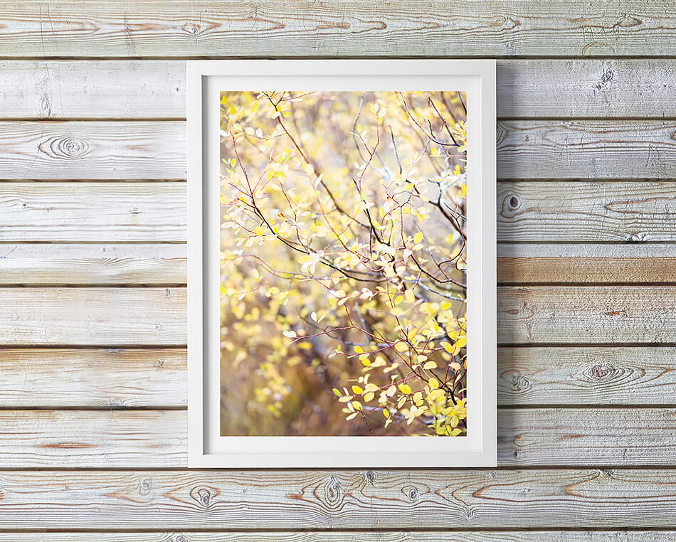 autumn print travel photographic print new zealand coastal home interior wall art coastal home print natural interior wall art natural print