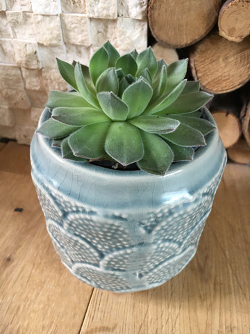 Small coral plant pot - Home Bee