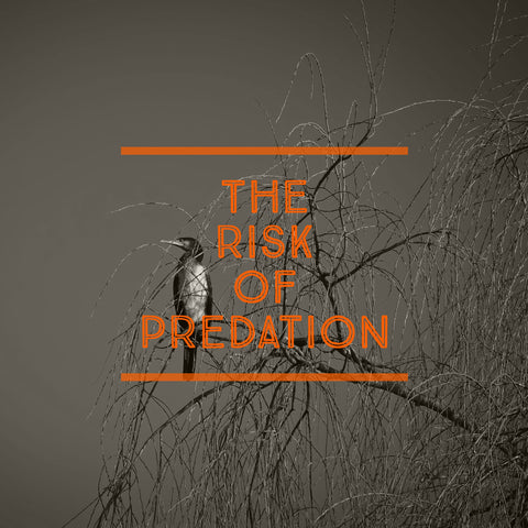 Fishery Management: The Risk of Predation