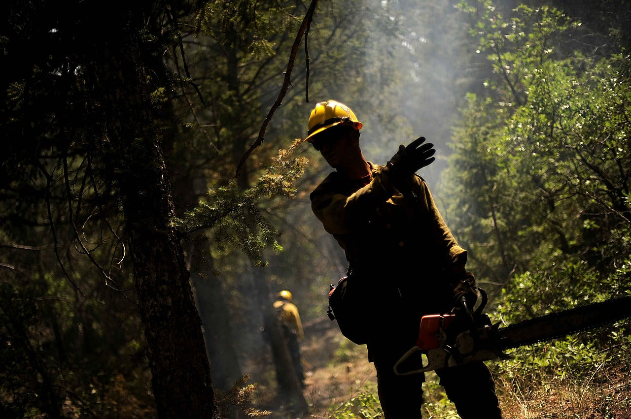 The Controversial Practice of Post-Wildfire Salvage Logging