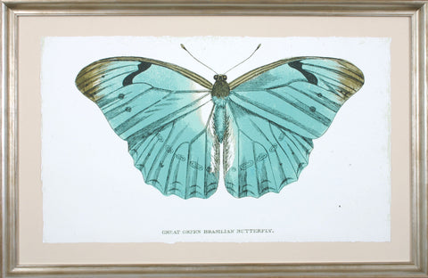 GREEN BRASILIAN BUTTERFLY **EXCLUSIVE**