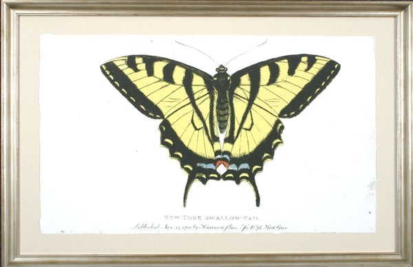 NEW YORK SWALLOWTAIL **EXCLUSIVE**