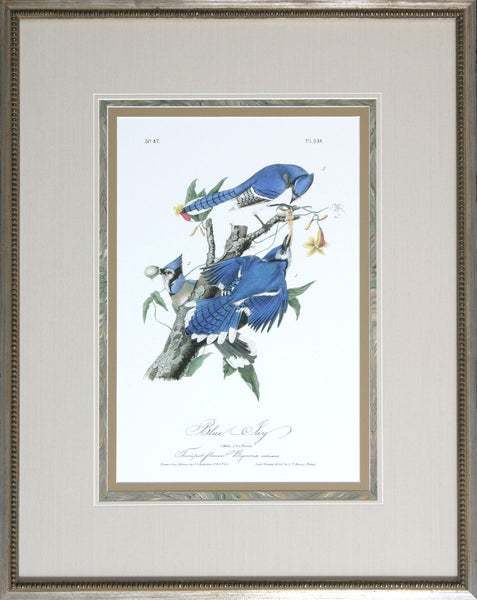AUDUBON BLUE JAYS