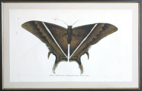ANTIQUE MOTH I
